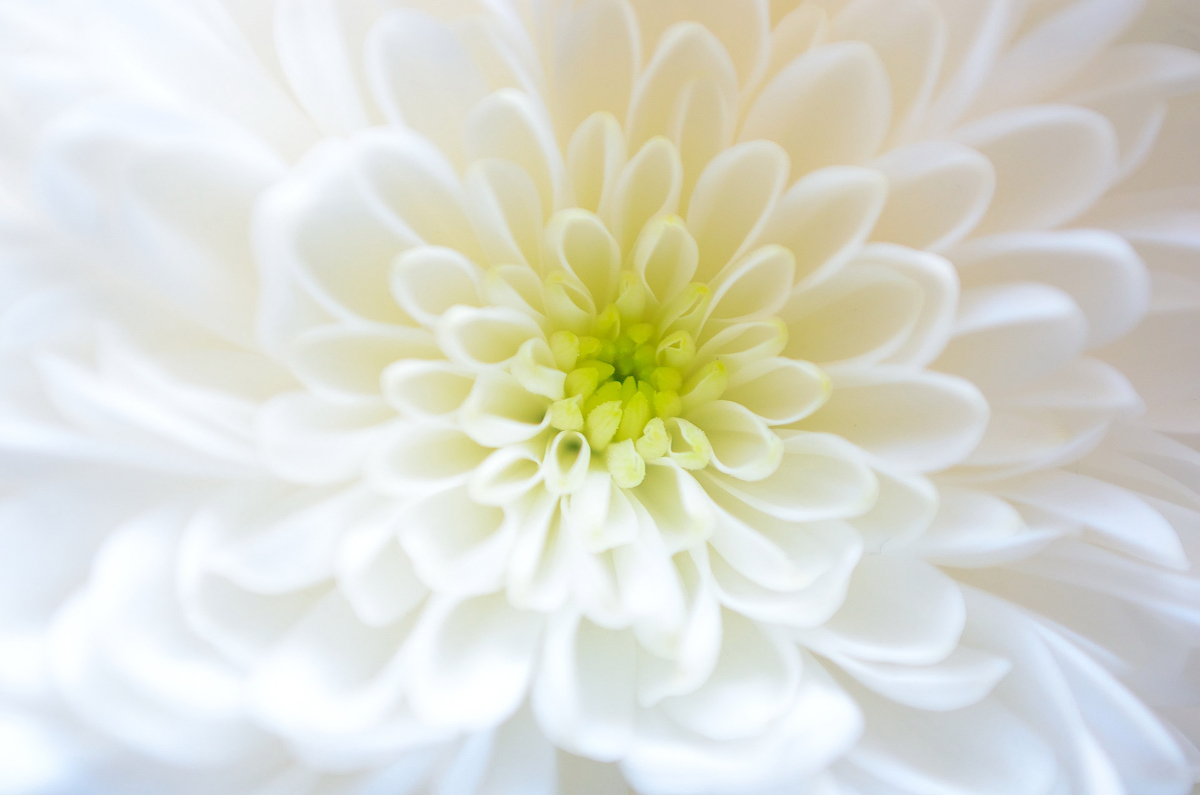 nice_flower